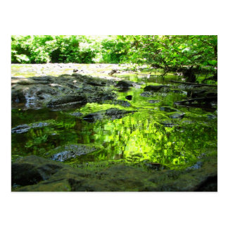 Puddle Green Postcard