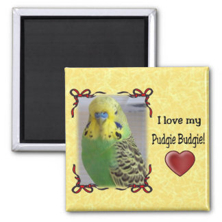 Pudgie Budgie 3 2 Inch Square Magnet