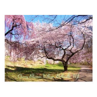 Pueblo 01 de la flor de cerezo tarjetas postales