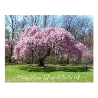 Pueblo 03 de la flor de cerezo tarjetas postales