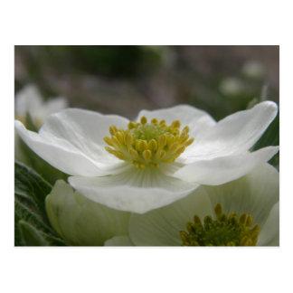 Puede florecer en perfil en la isla de Unalaska Postal