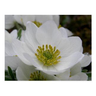 Puede florecer los flores, isla de Unalaska Tarjetas Postales