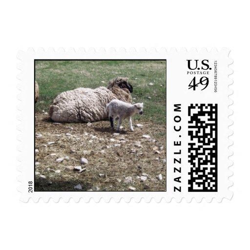 Pueden parir y las ovejas envio