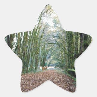 puente cubierto de musgo pegatina en forma de estrella