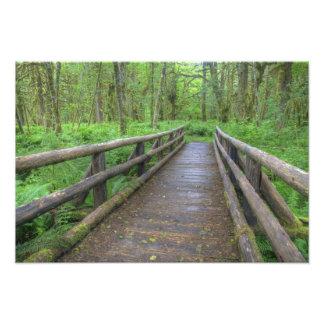 Puente de madera del rastro del claro del arce he impresion fotografica