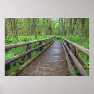 Puente de madera del rastro del claro del arce, he póster