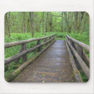 Puente de madera del rastro del claro del arce he tapetes de ratón
