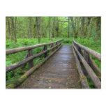 Puente de madera del rastro del claro del arce, postal