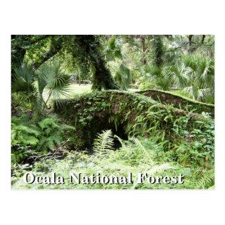 Puente en la postal de la Florida del bosque del