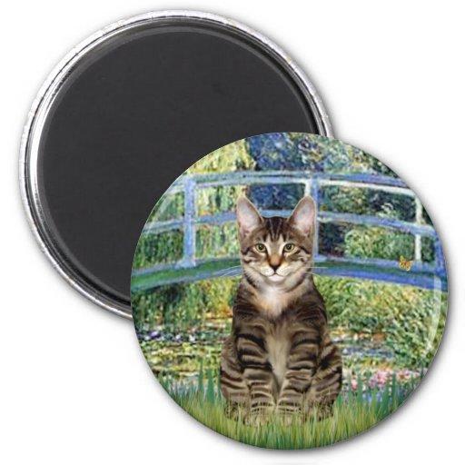 Puente - gato de tigre del Tabby 30 Iman Para Frigorífico
