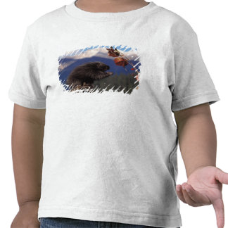Puerco espín común que come el alto cepillo de camisetas