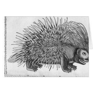 Puerco espín, de 'Historia Animalium Tarjeta De Felicitación