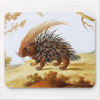 Puerco espín - pintura del puerco espín del vintag tapetes de raton