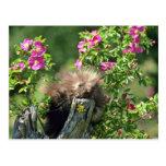 Puerco-joven en flores salvajes del rosa color de  tarjetas postales