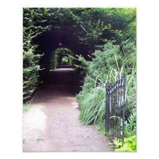 Puerta cubierta del seto y de jardín fotografías