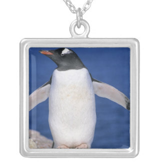 Puerto de Papua del Pygoscelis del pingüino de Gen Joyerias