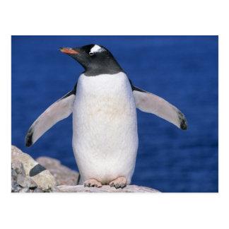 Puerto de Papua del Pygoscelis del pingüino de Gen Postal