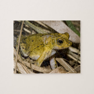 Puerto Rican Crested Toad Jigsaw Puzzle