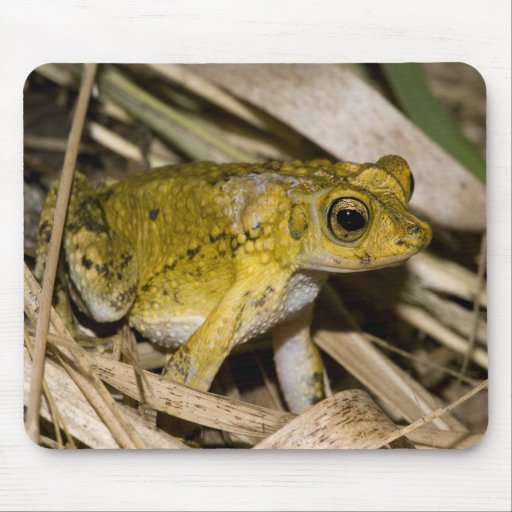Puerto Rican Crested Toad Mouse Pad
