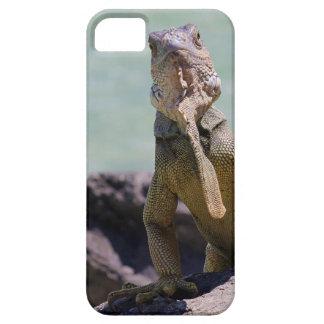 Puerto Rican Large Iguana iPhone 5 Cases