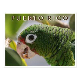 Puerto Rican Parrot Postcard