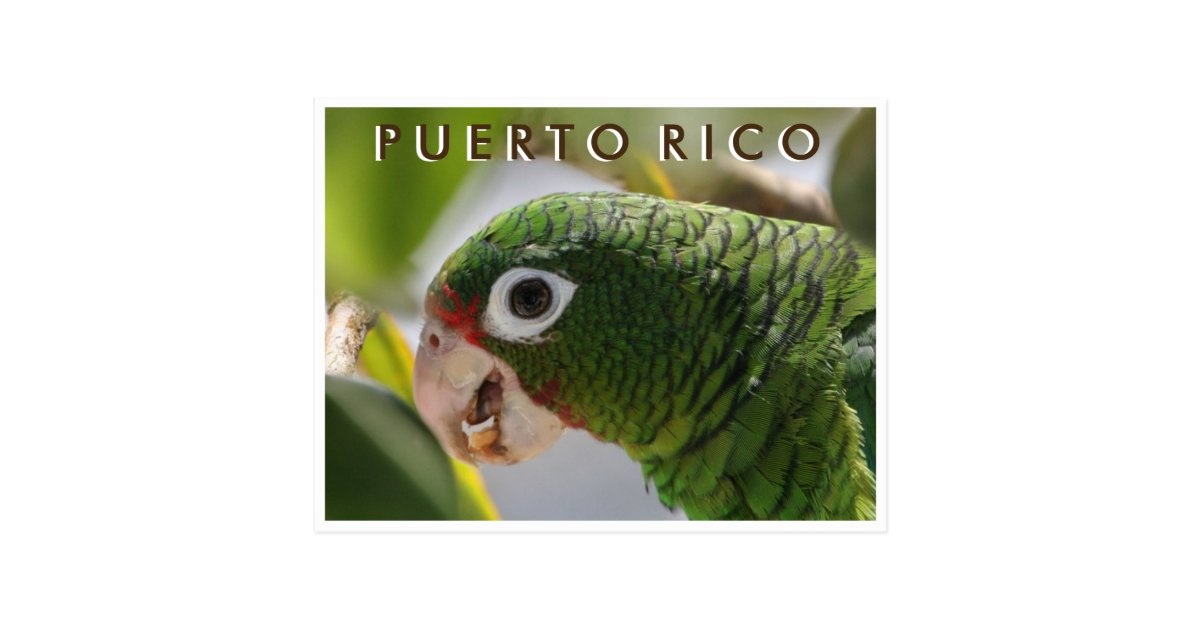 Puerto Rican Parrot Postcard | Zazzle.com