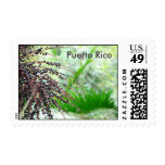Puerto Rican Rain Forest Postage