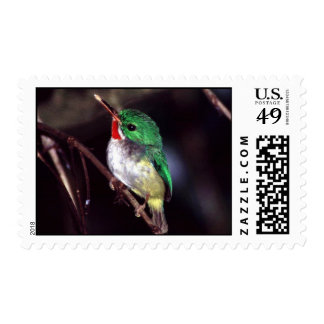 Puerto Rican Tody and Endemic Bird in Puerto Rico Postage