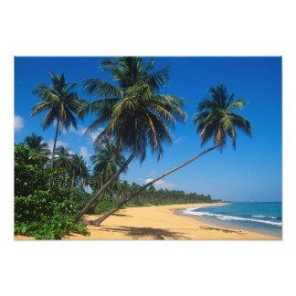 Puerto Rico, Isla Verde, árboles de palma Fotografía
