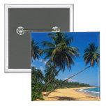 Puerto Rico, Isla Verde, árboles de palma Pin Cuadrada 5 Cm