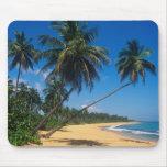 Puerto Rico, Isla Verde, árboles de palma Alfombrillas De Raton