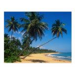 Puerto Rico, Isla Verde, árboles de palma Tarjeta Postal