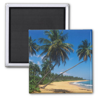 Puerto Rico, Isla Verde, palm trees. 2 Inch Square Magnet