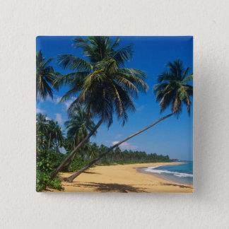Puerto Rico, Isla Verde, palm trees. Button