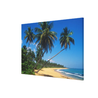 Puerto Rico, Isla Verde, palm trees. Gallery Wrapped Canvas