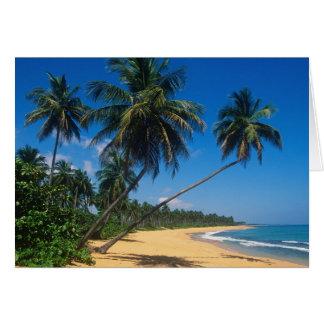 Puerto Rico, Isla Verde, palm trees. Card