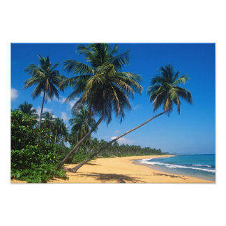 Puerto Rico, Isla Verde, palm trees. Photo Print