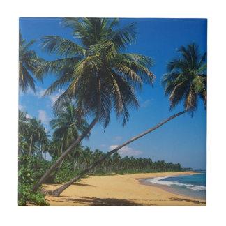 Puerto Rico, Isla Verde, palmeras Azulejo Cuadrado Pequeño