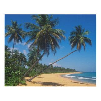 Puerto Rico, Isla Verde, palmeras Cuadro
