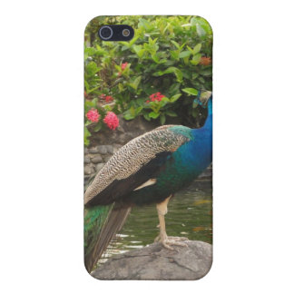 Puerto Rico Peacock  Cover For iPhone SE/5/5s