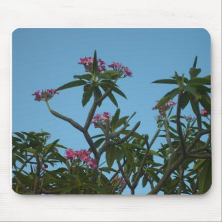 Puerto Rico Pink Mouse Pads