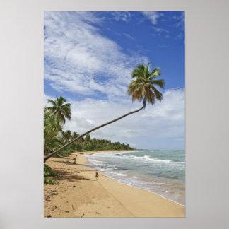Puerto Rico. Playa Puerto Rico de Tres Palmitas Posters