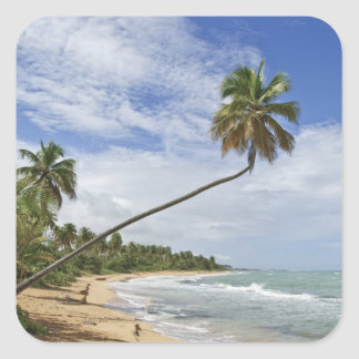 Puerto Rico. Playa Puerto Rico de Tres Palmitas Colcomanias Cuadradas