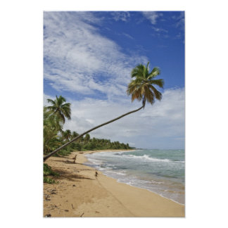 Puerto Rico. Playa Puerto Rico de Tres Palmitas Póster