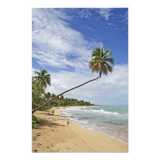 Puerto Rico Tres Palmitas Beach Puerto Rico Photo Print