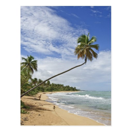 Puerto Rico. Tres Palmitas Beach Puerto Rico Post Cards