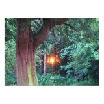 Puesta del sol a través de árboles invitación 12,7 x 17,8 cm