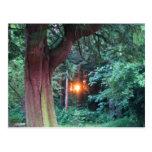 Puesta del sol a través de árboles postal