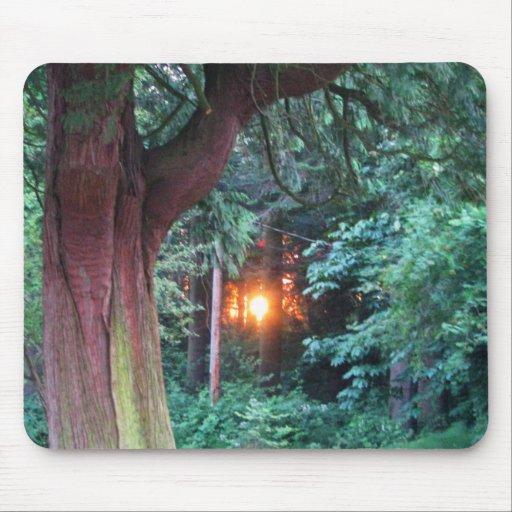 Puesta del sol a través de árboles tapete de raton
