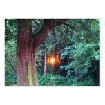 Puesta del sol a través de árboles tarjetas de visita grandes